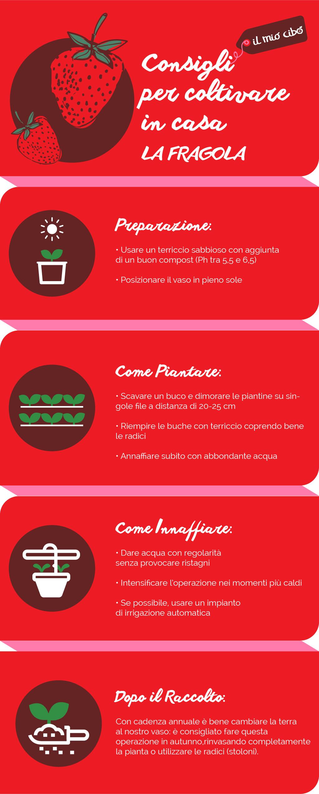 Consigli Per La Casa infografica: consigli per coltivare in casa - la fragola